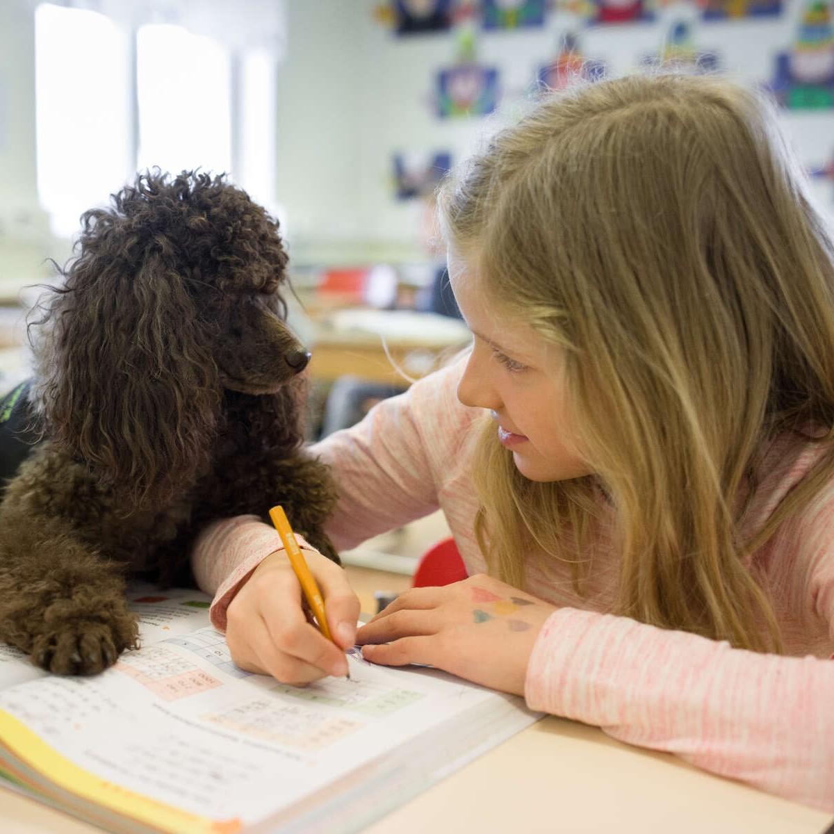 KKKT-kouluapu - koirat kasvatus- ja kuntoutustyössä ry