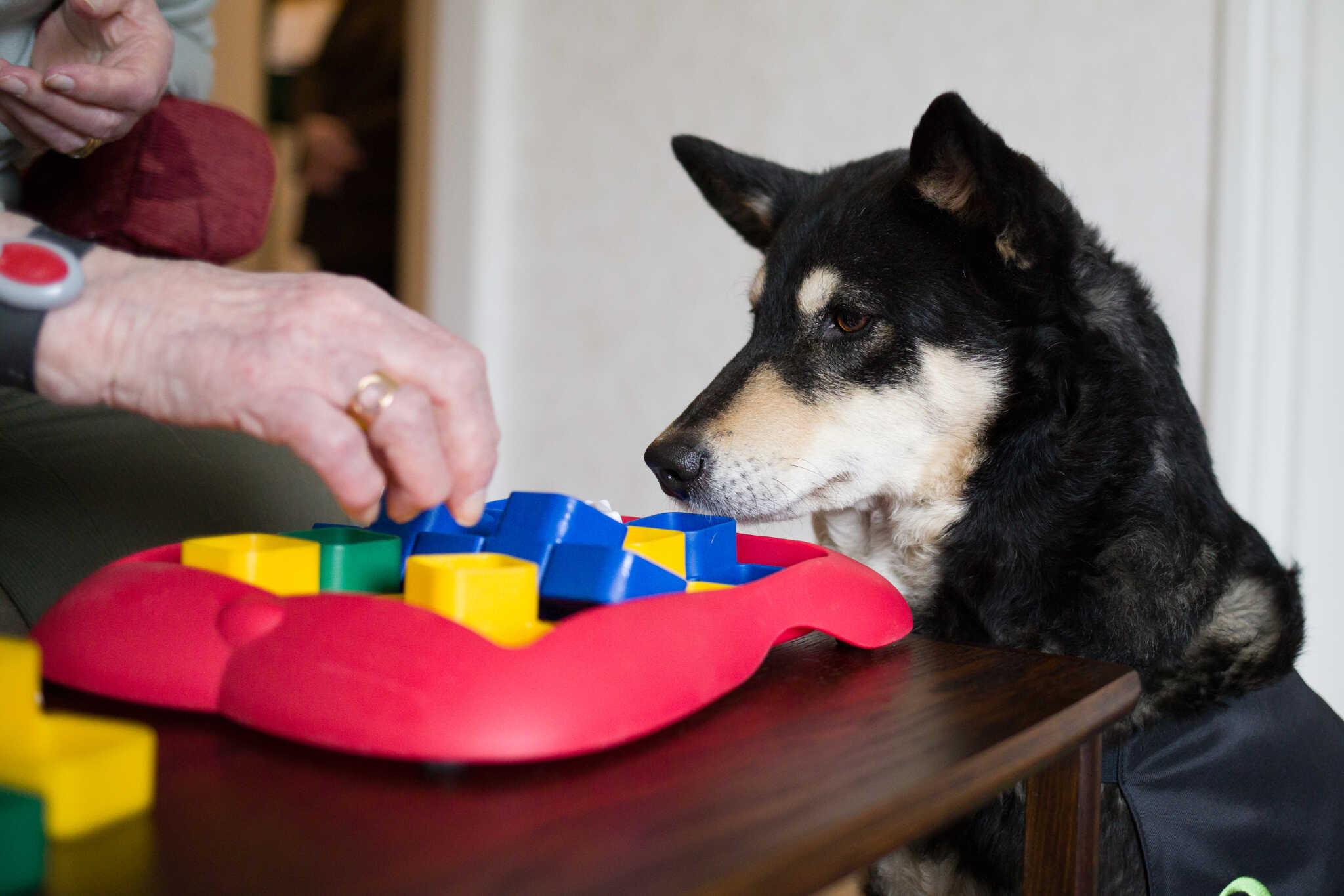 Koira toimintaterapian tukena